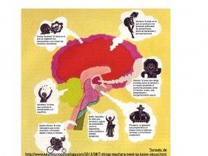 brain.001