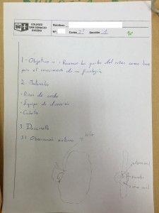 Diseccion riñon_guion alumno